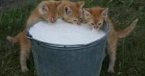 APIA: Declaraţiile pentru cota de lapte trebuie depuse până în 14 mai