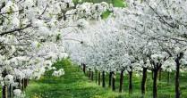 7 idei de afaceri în agricultură profitabile pe suprafeţe mici şi foarte mici