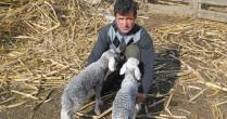 Fermierii, luați la întrebări: Statisticienii le calcă pragul să le numere animalele și pământurile