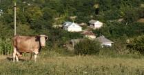 Zootehnia in Vorniceni