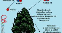 Datarea cu carbon-14